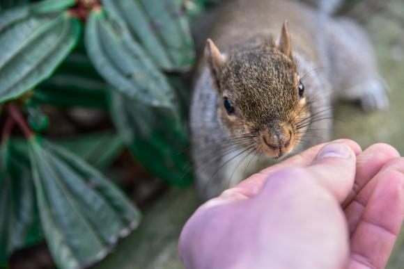 Chester Squirrel